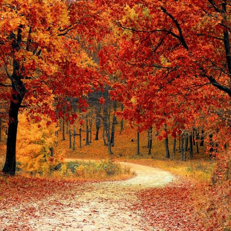 road, forest, fall