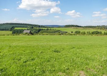 Rolling landscape with meadows and pine trees in Winterberg, Germany.